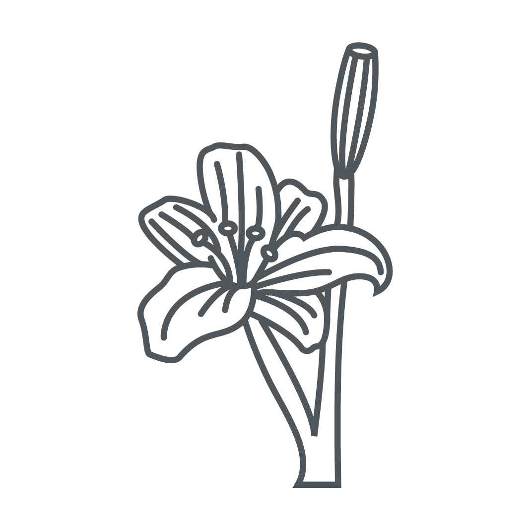 Rose Lillies