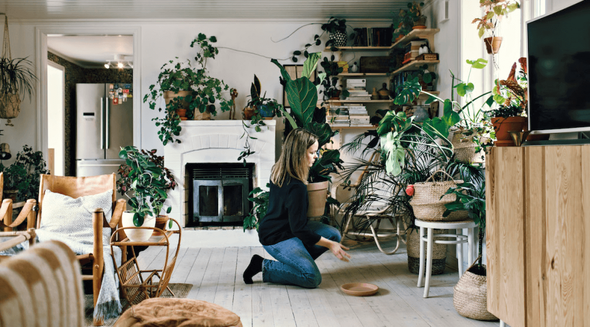 Woman organizing a room full of green plants