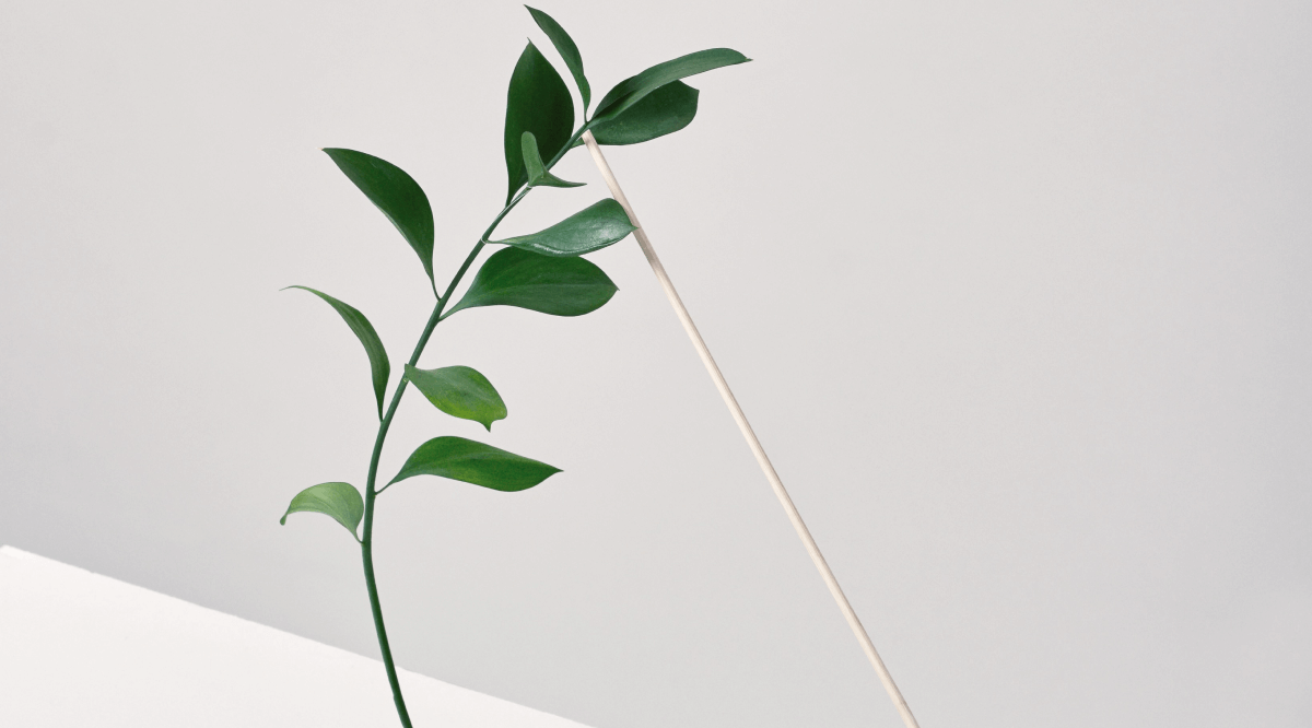 Close up of plant leave on white background