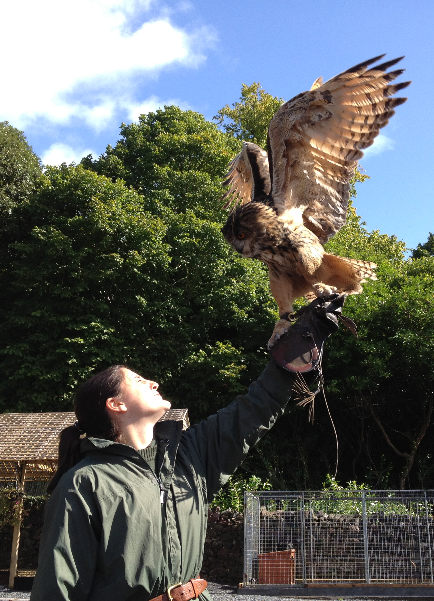 Eagle owl lands on a woman's gloved hand at a falcony demo at Ashford castle, part of the Essential Ireland Castles & Classics Tours