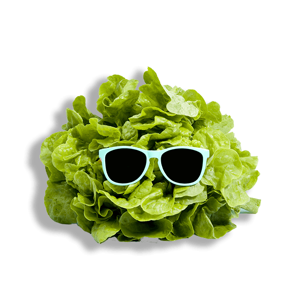 Cool lettuce  Skein Agency digital design marketing Glasgow