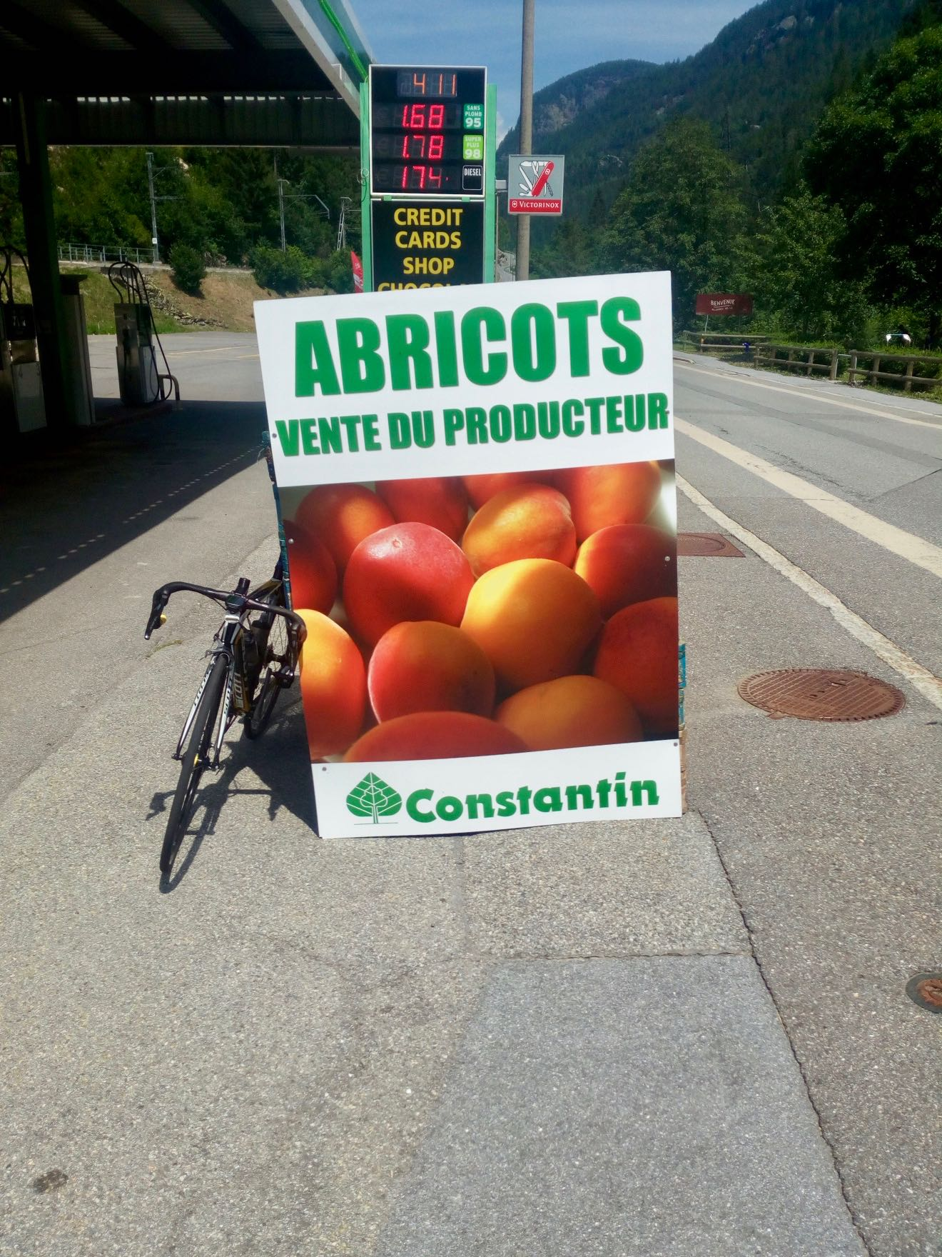 """Apricots from """"Constantin"""""""