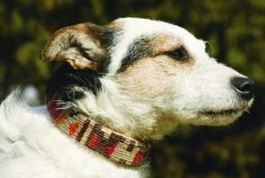 Nomad Ideas Kilim Dog Collars