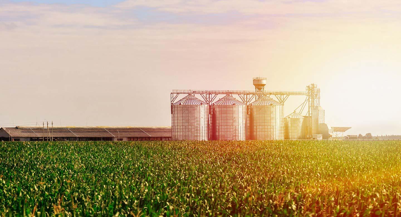 farm and grain bins behind corn field