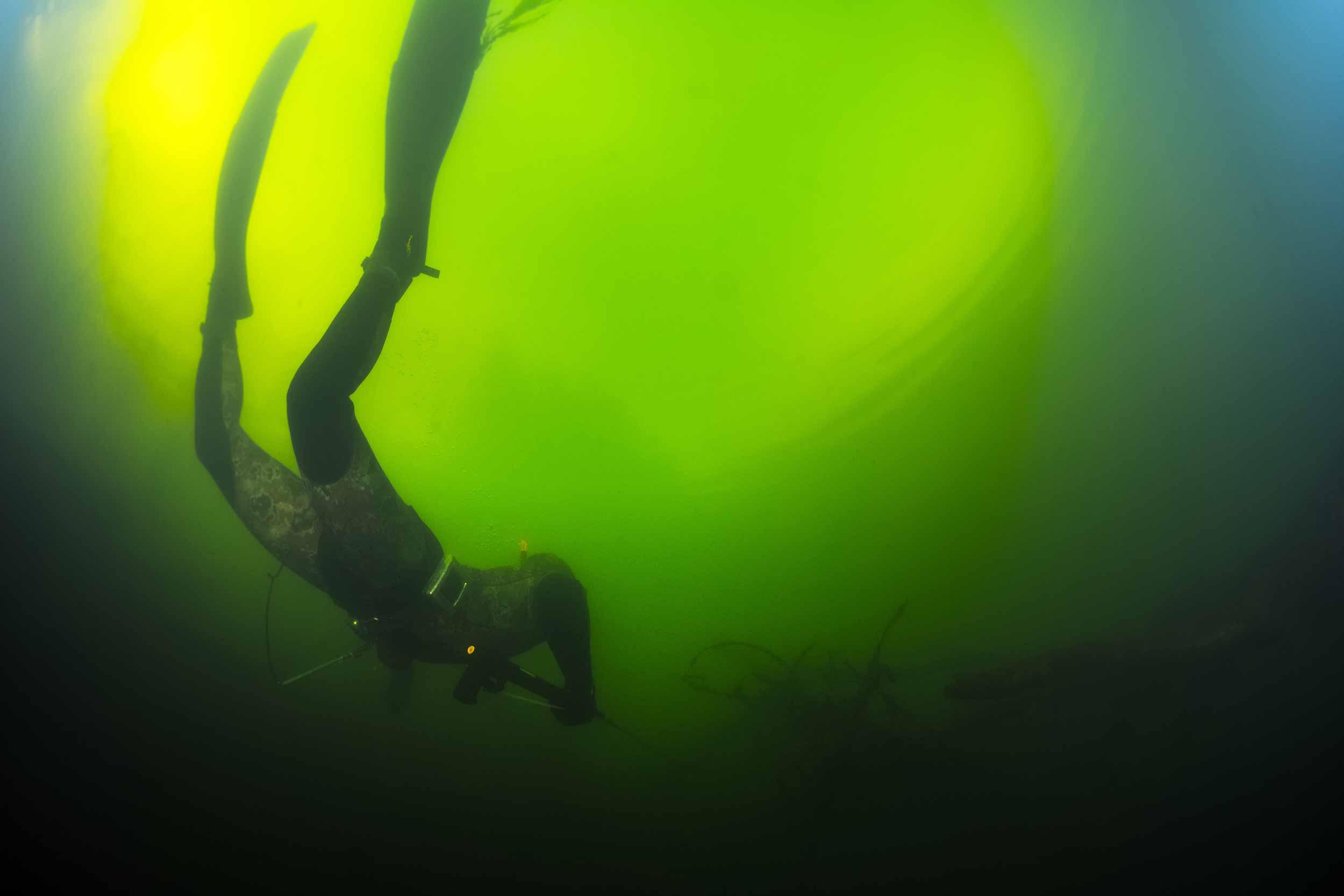 join NZ Underwater
