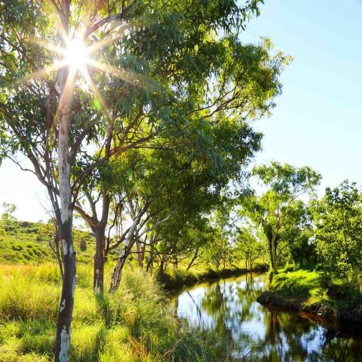 Light shining through tree by a creek in Western Australia