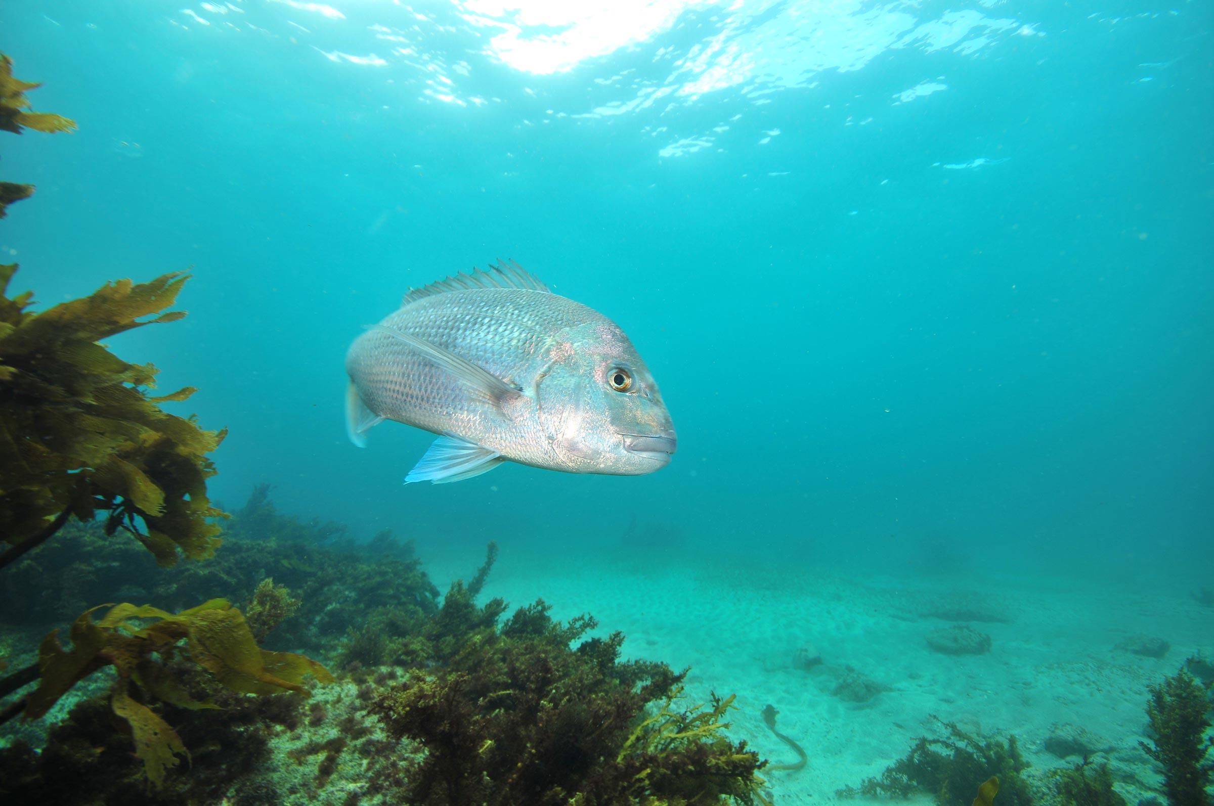 Kaikoura temporary fishing closure consultation