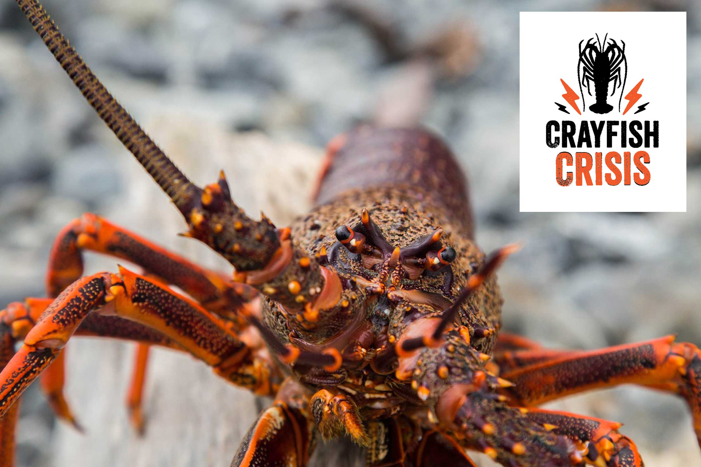 LegaSea - Voluntary Crayfish Bag Limit Reduction