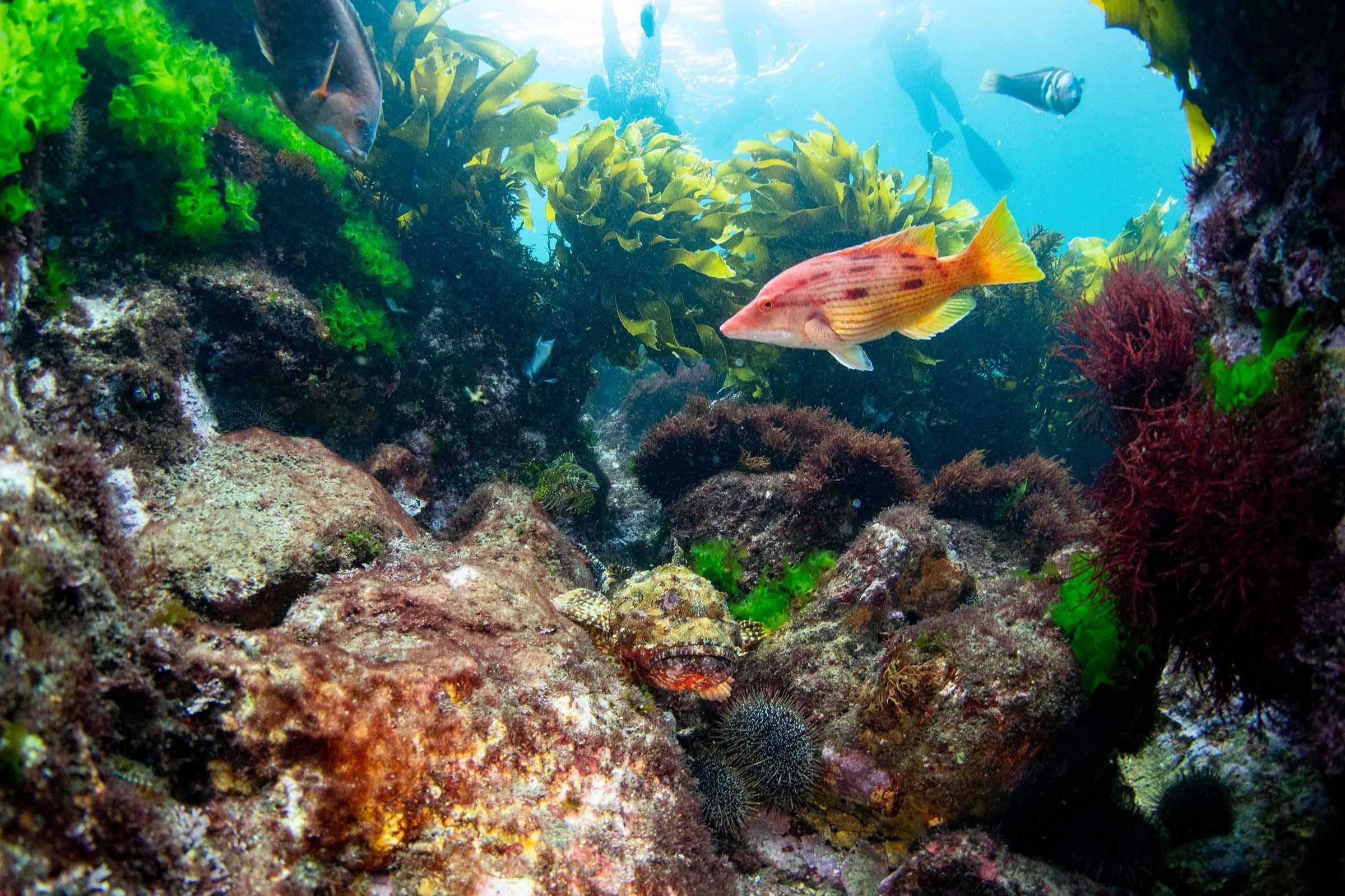 Snorkelling at the Mokohinau Islands