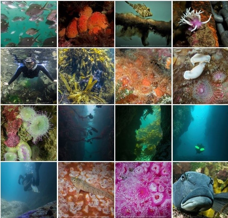 Wellington Underwater Club photo competition