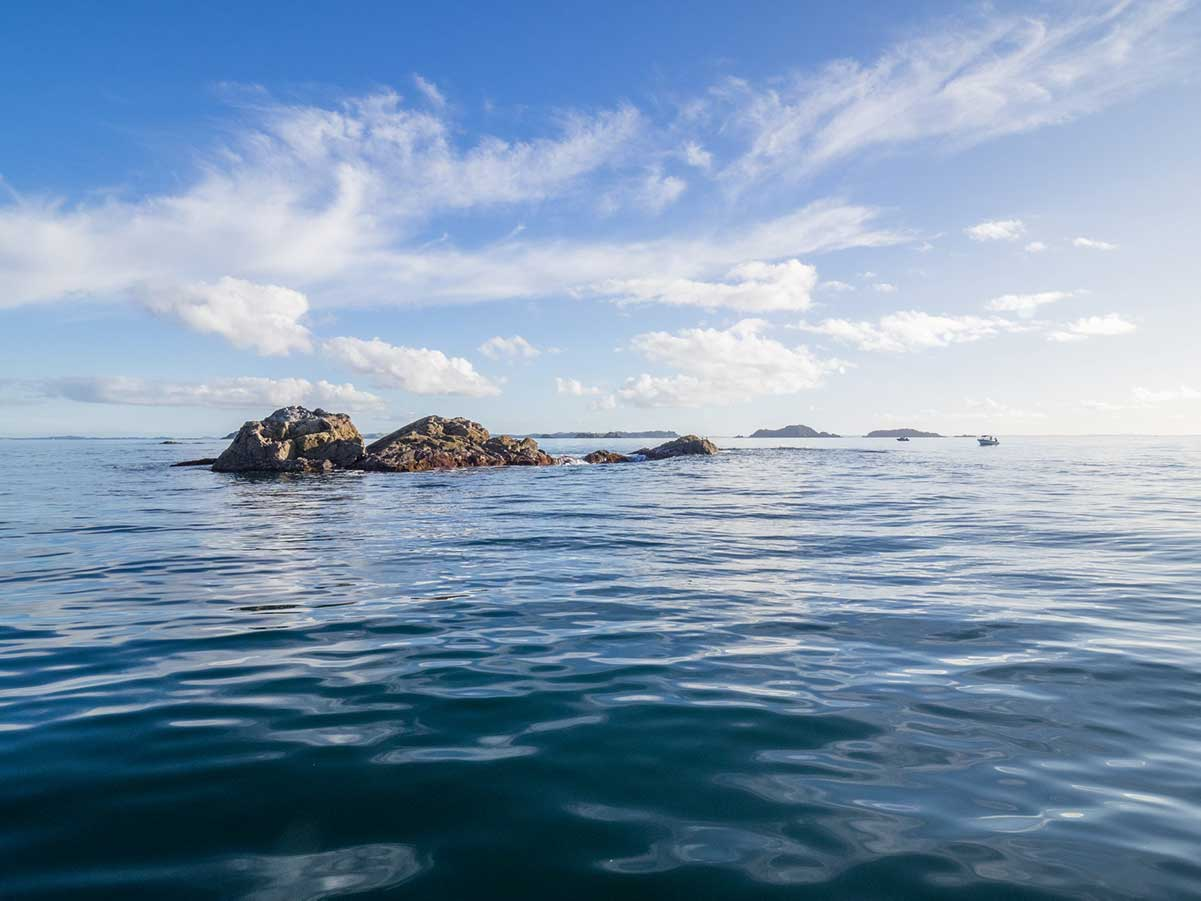 Government stocktake: four big things hurting our marine environment