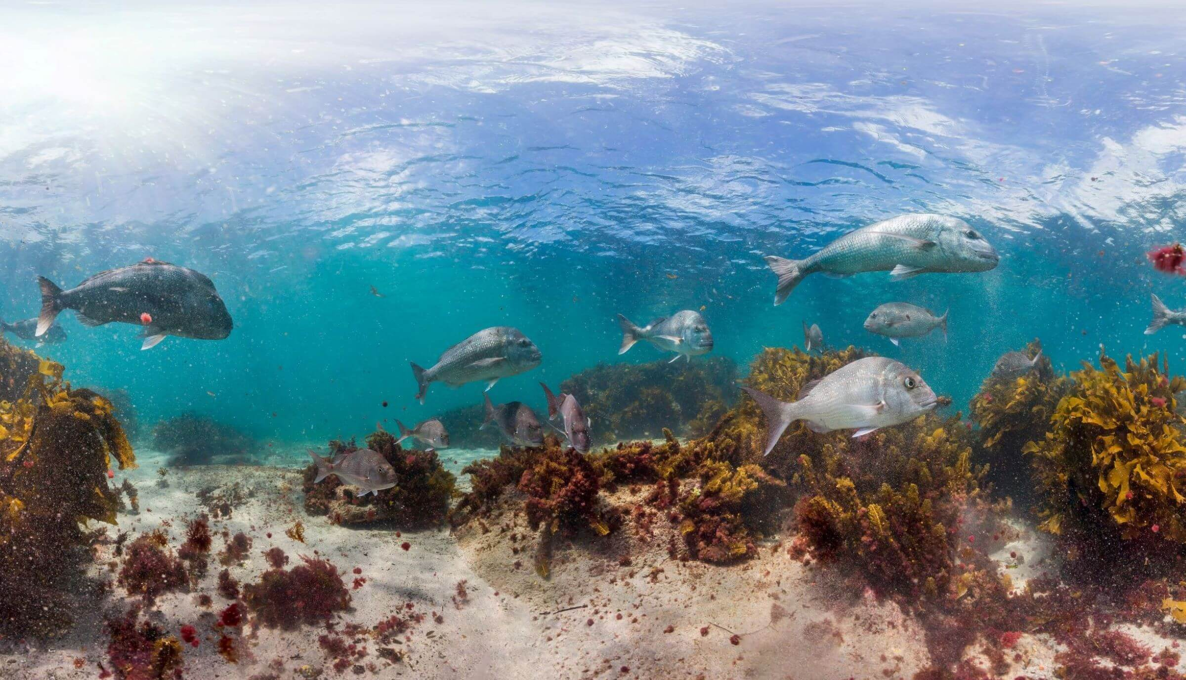 Experience NZ's Marine Reserves this Summer