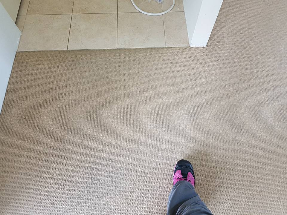 A carpet after being cleaned
