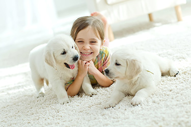 fresh carpets after pet urine treatments