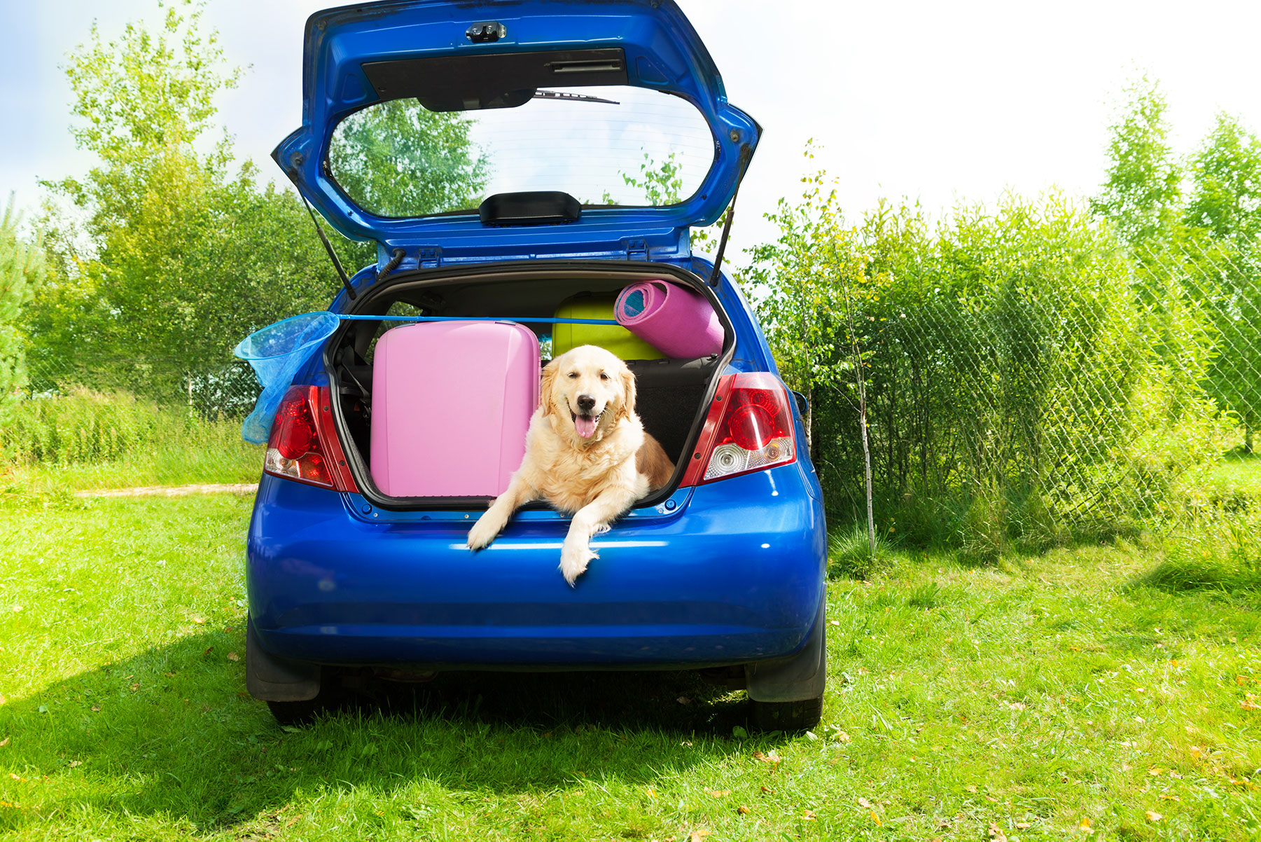 Image of packed family car with dog.