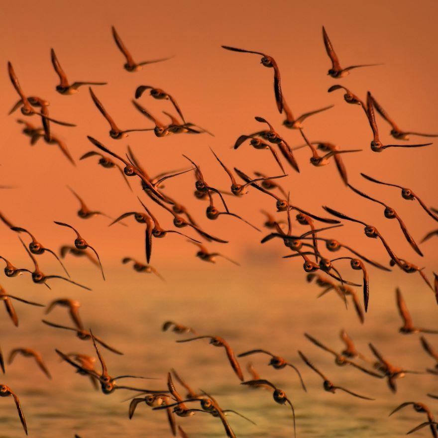 Kun je een migratieproject agile uitvoeren?