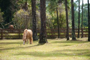 seaside-palm-beach-equine-therapy