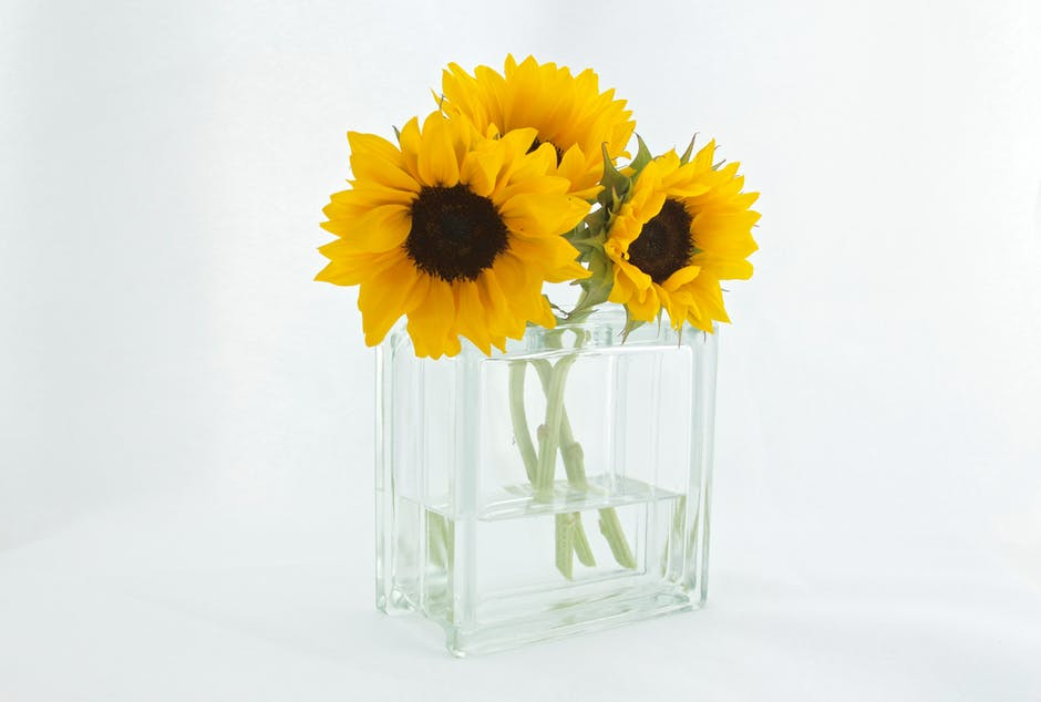 A clear rectangle vase of sunflowers in a littel bit of water.