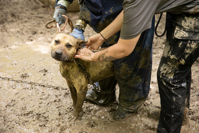 ASPCA® Assists Indiana Gaming Commission in Rescuing Nearly 600 Birds and Dogs from Animal Fighting Case