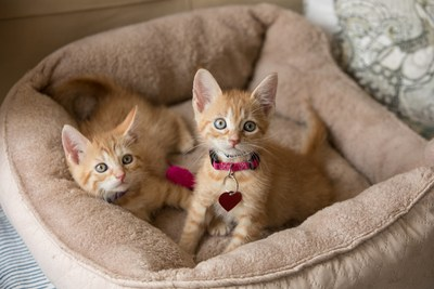 It's Kitten Season across the nation and the ASPCA is looking for foster caregivers to open their homes to kittens under 8 weeks old. Learn more about Meow For Now at ASPCA.org/MeowForNow.