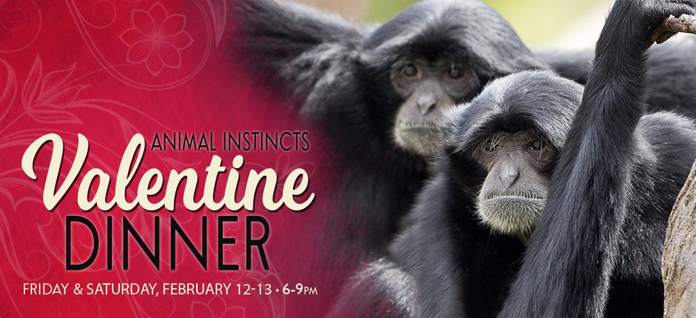 Animal Instinct's Valentine Dinner