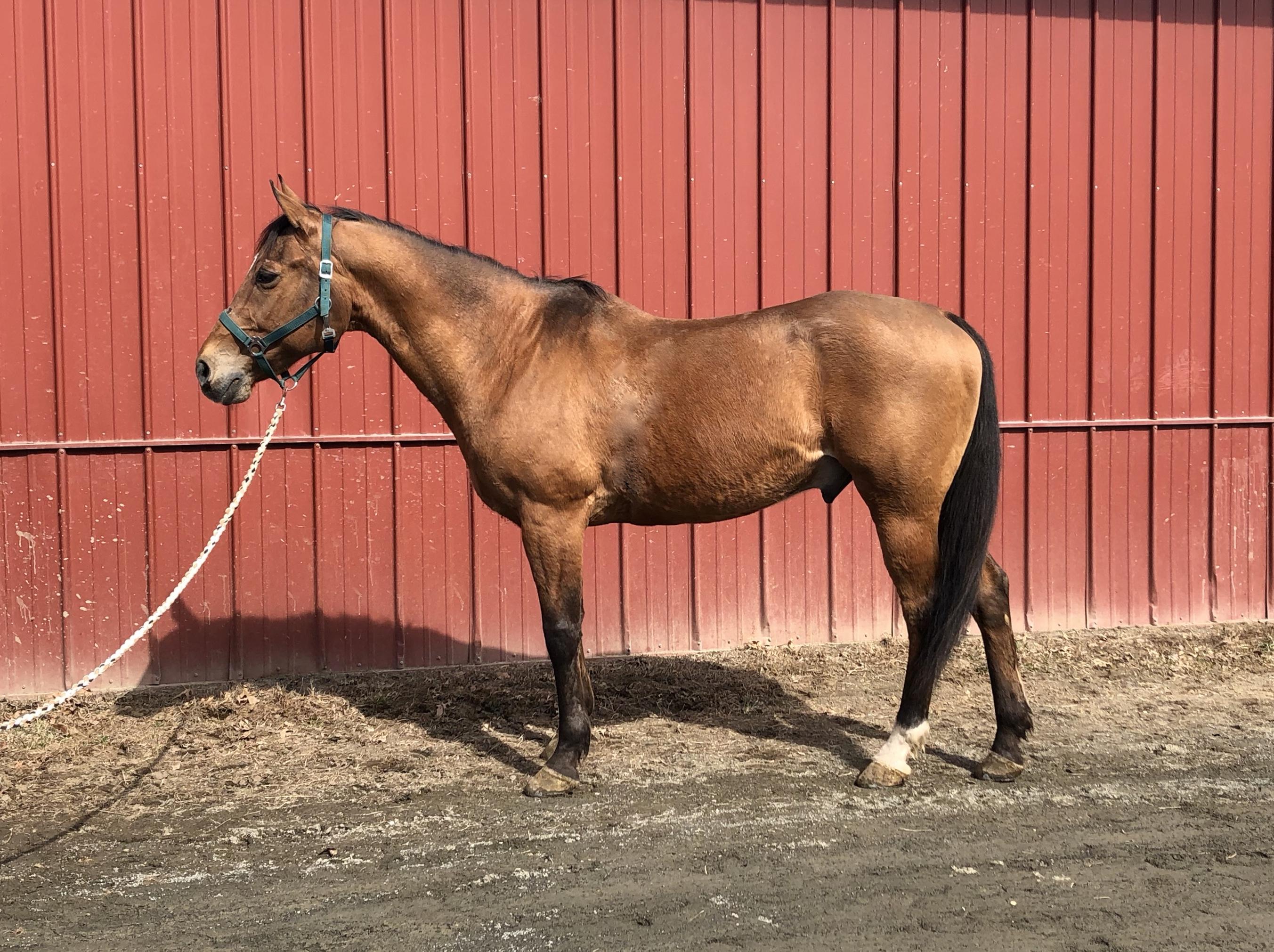 Strain Family Horse Farm | Horses For Sale