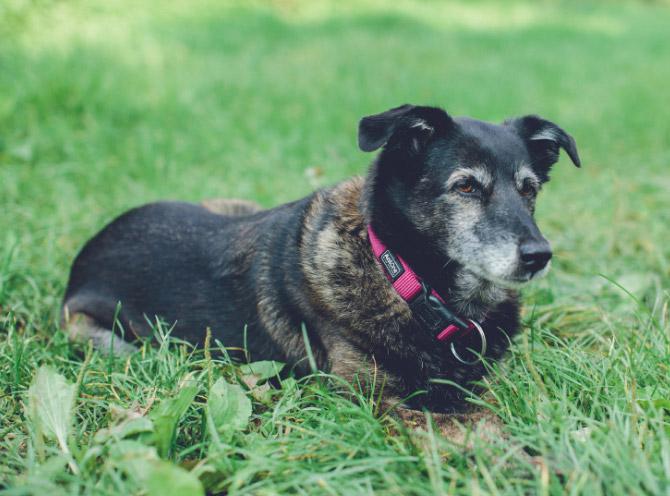 Weinhaus Hauck Foto Hund Felix