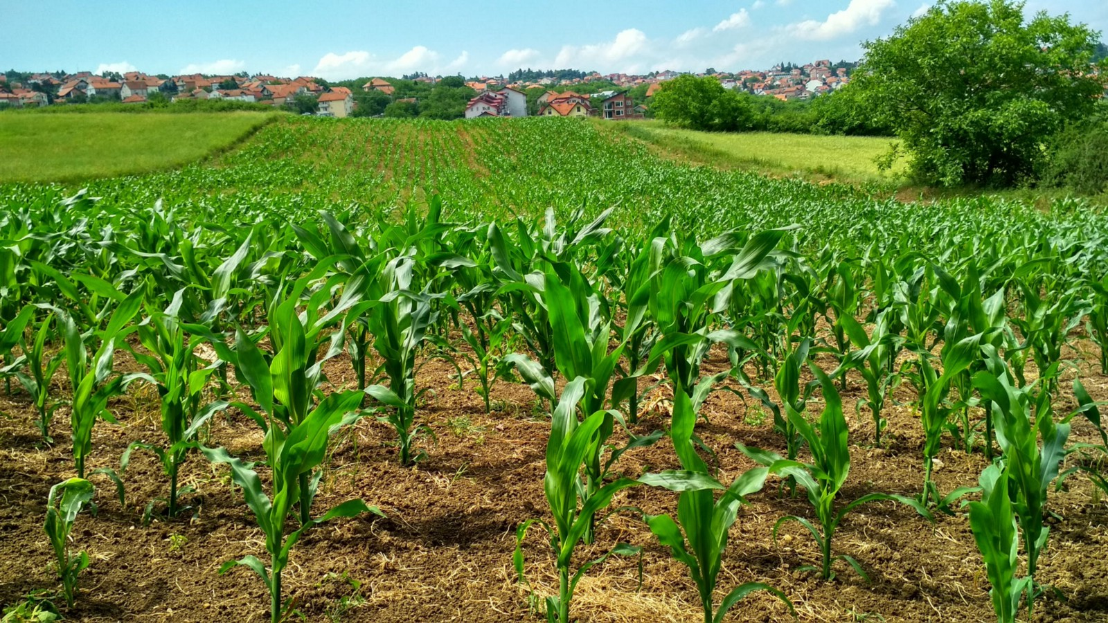 Problems and Potential in Row Crop Farming