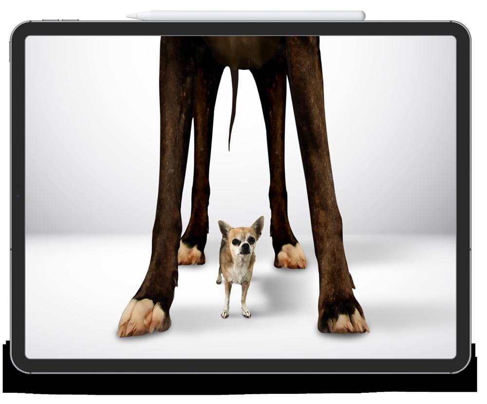 Tablet mit dem Bild einer Dogge und eines Chihuahuas