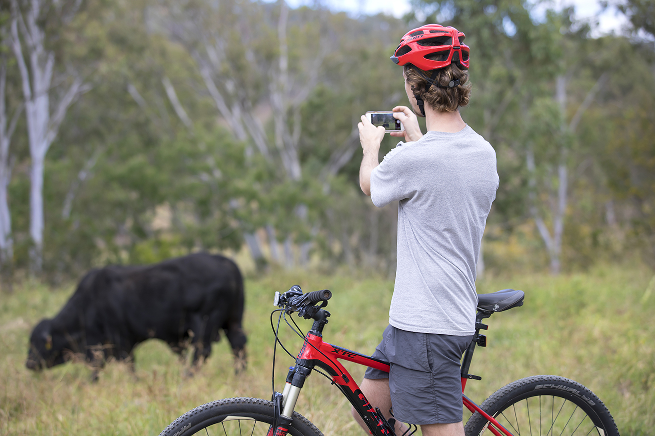 Photo of a man on a bike taking a photo of a cow, with trees in the background.