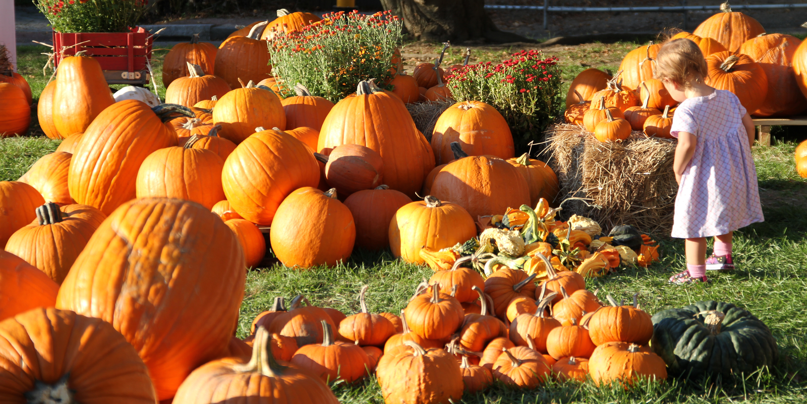 """Falling"" for Fall in Windber!  10 Fun Activities You MUST Do This Season"