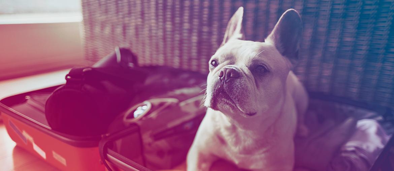 Você vai viajar para onde quiser: Faça um Consórcio de Viagem