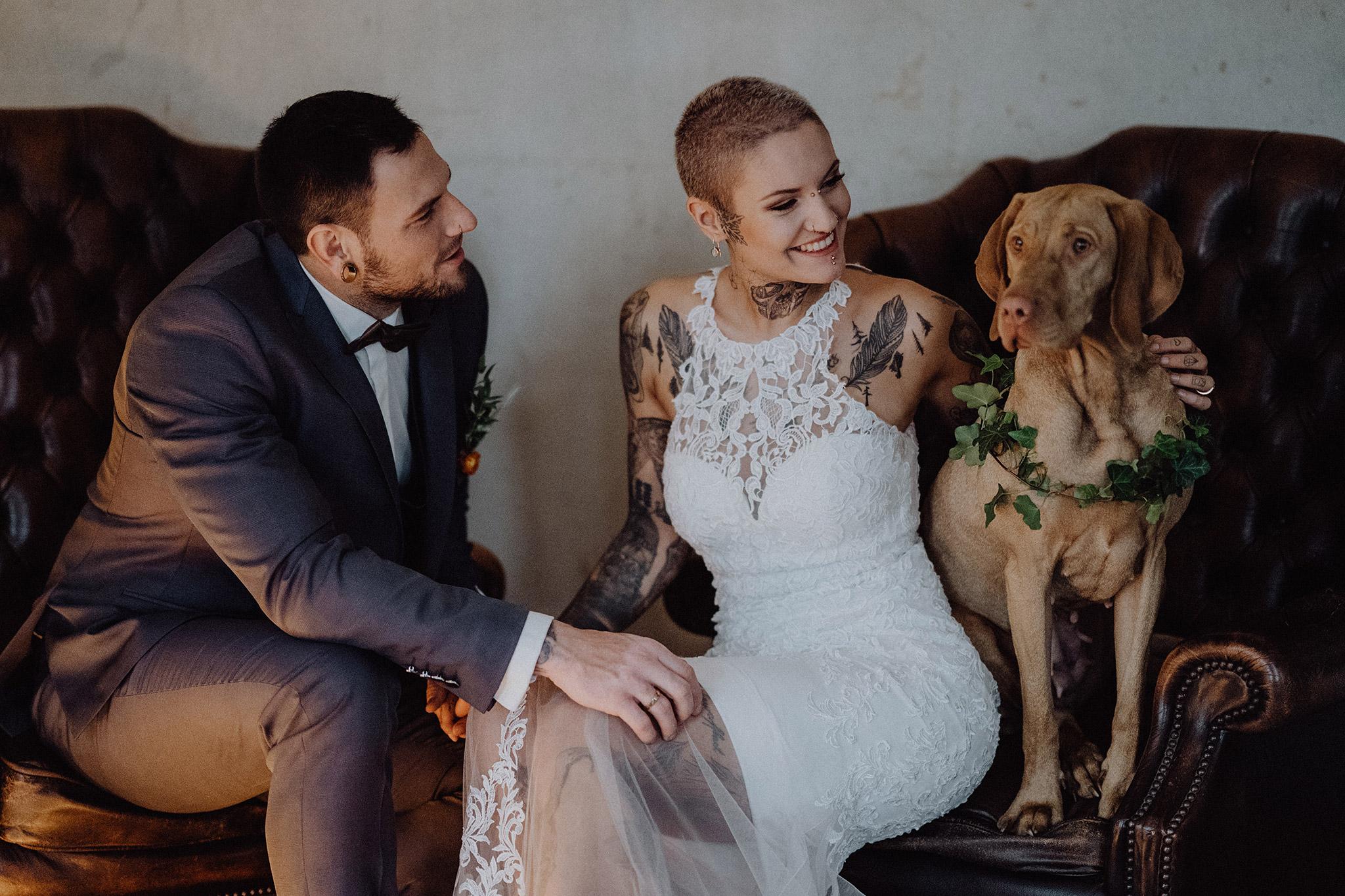 Hund Pferd Alpaka Tiere Auf Der Hochzeit