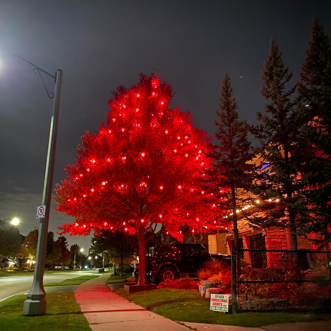 Christmas Light Installation