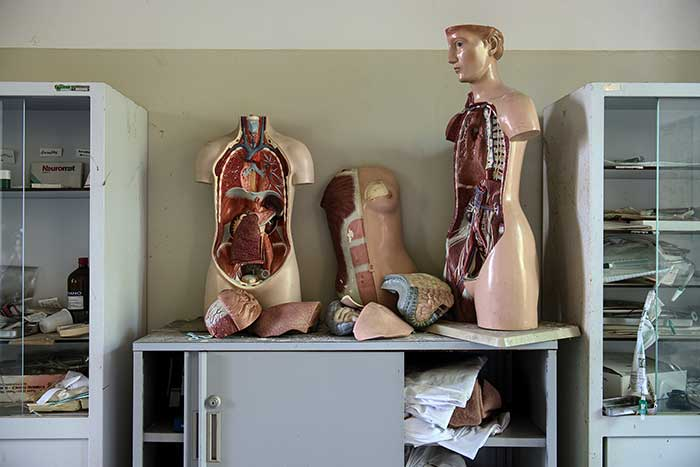 australian human anatomy medical cannabis the endocannabinoid sysem human bodies in class room
