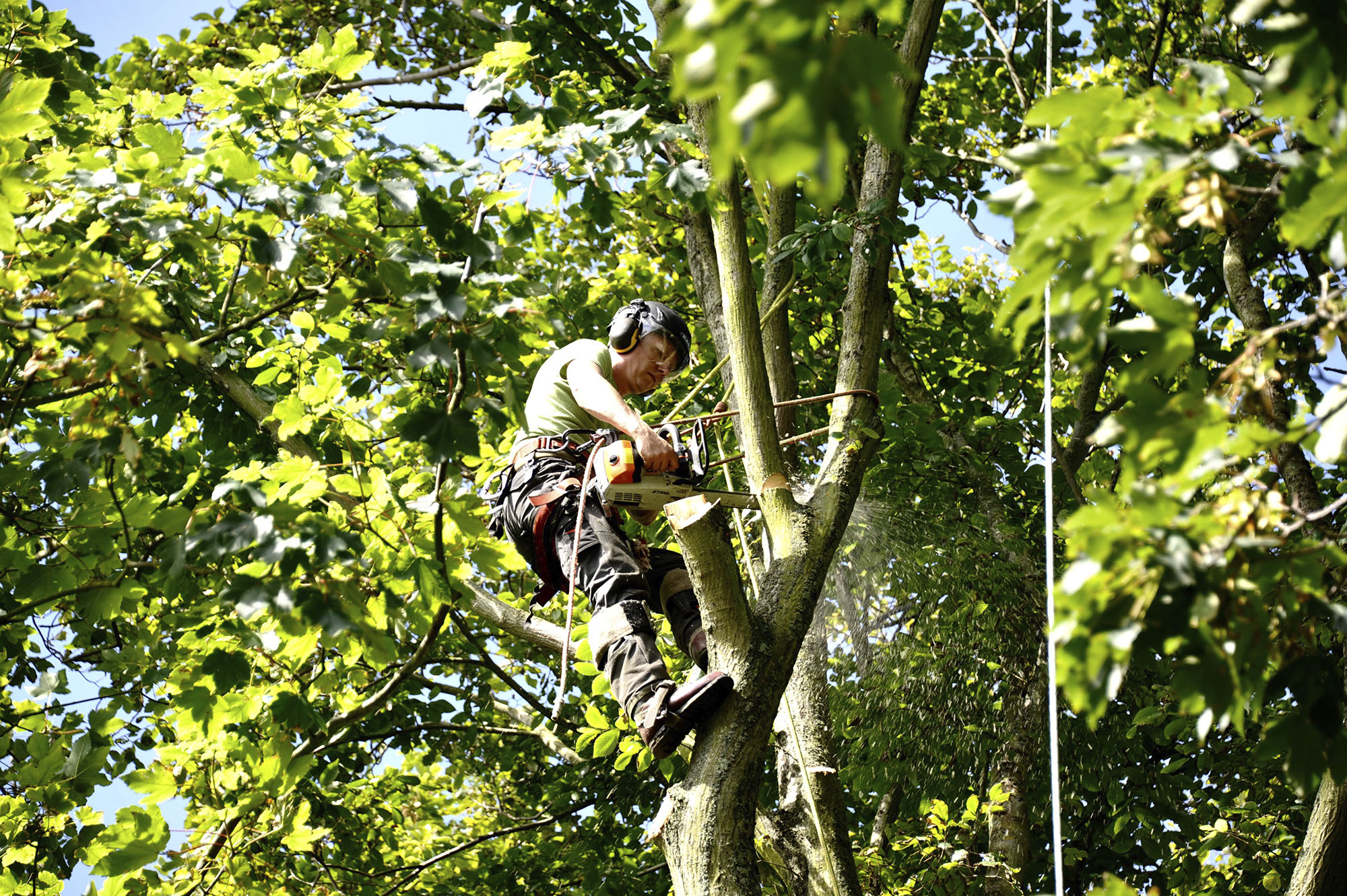 Boomverzorger/European treeworker