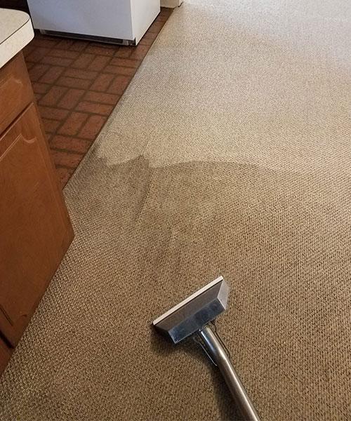 Carpet cleaning in Metro Detroit, MI
