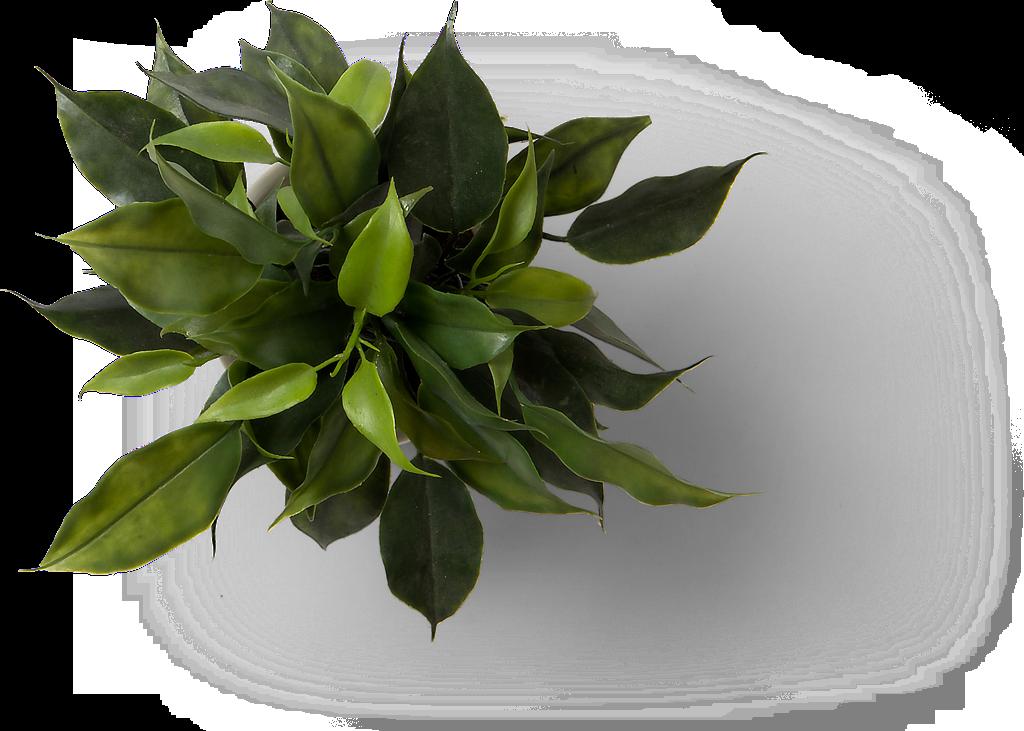 coindex_plant