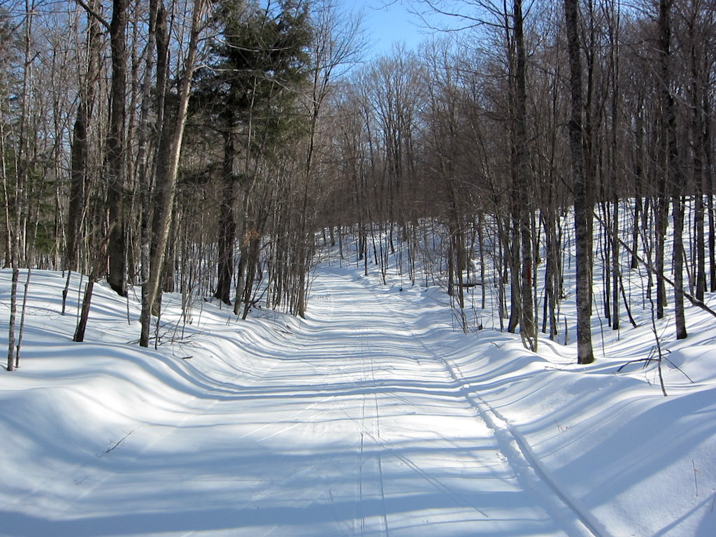 cross country ski trail at Blue Hills Trail