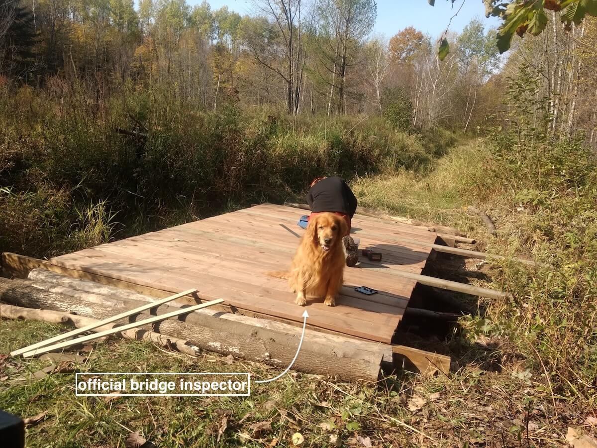 golden retriever supervising the bridge construction
