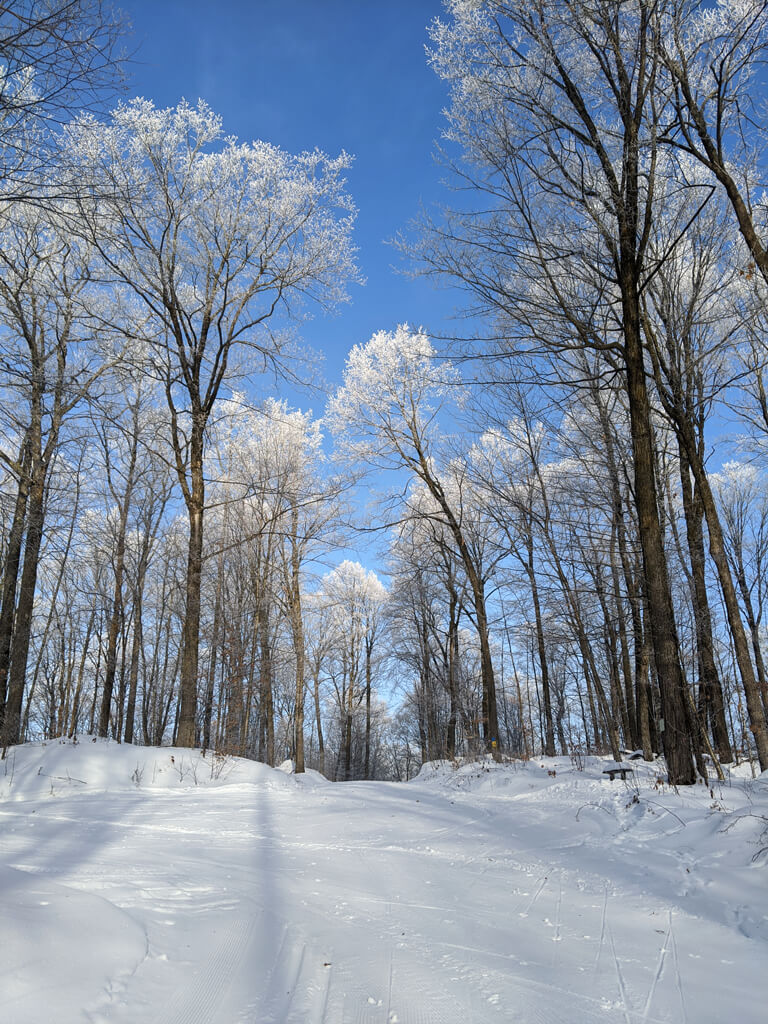 hoar frost on the Blue Hills Trail in northern Wisconsin