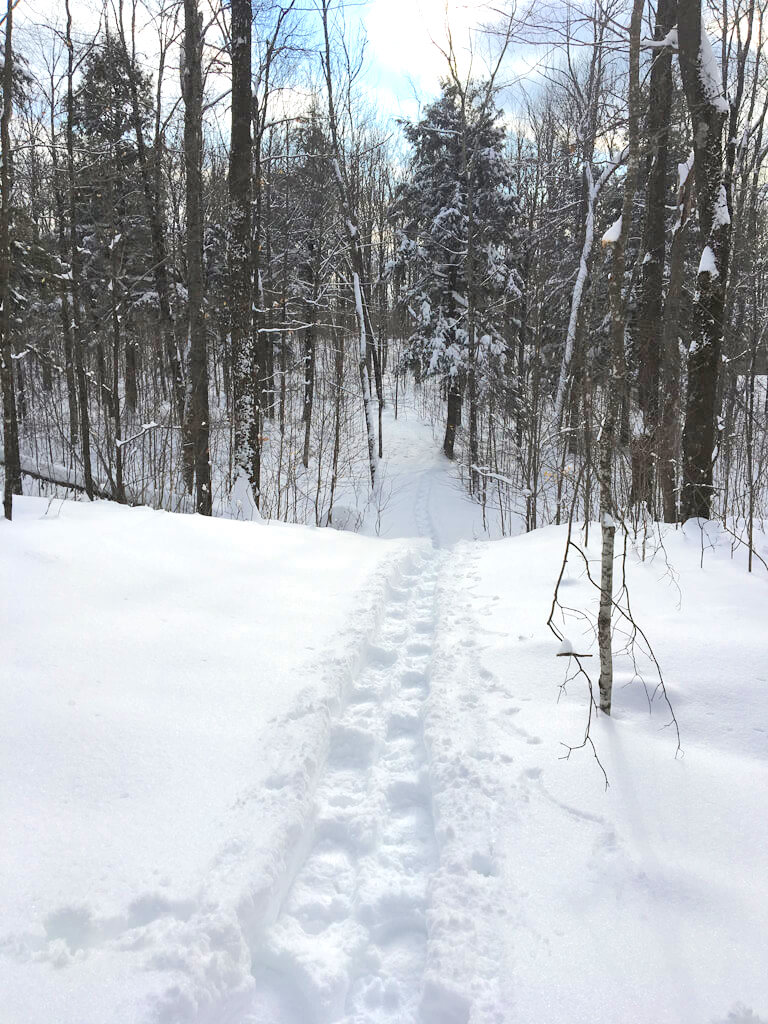 Blue Hills Trail snowshoeing on the 'Ridges' trail