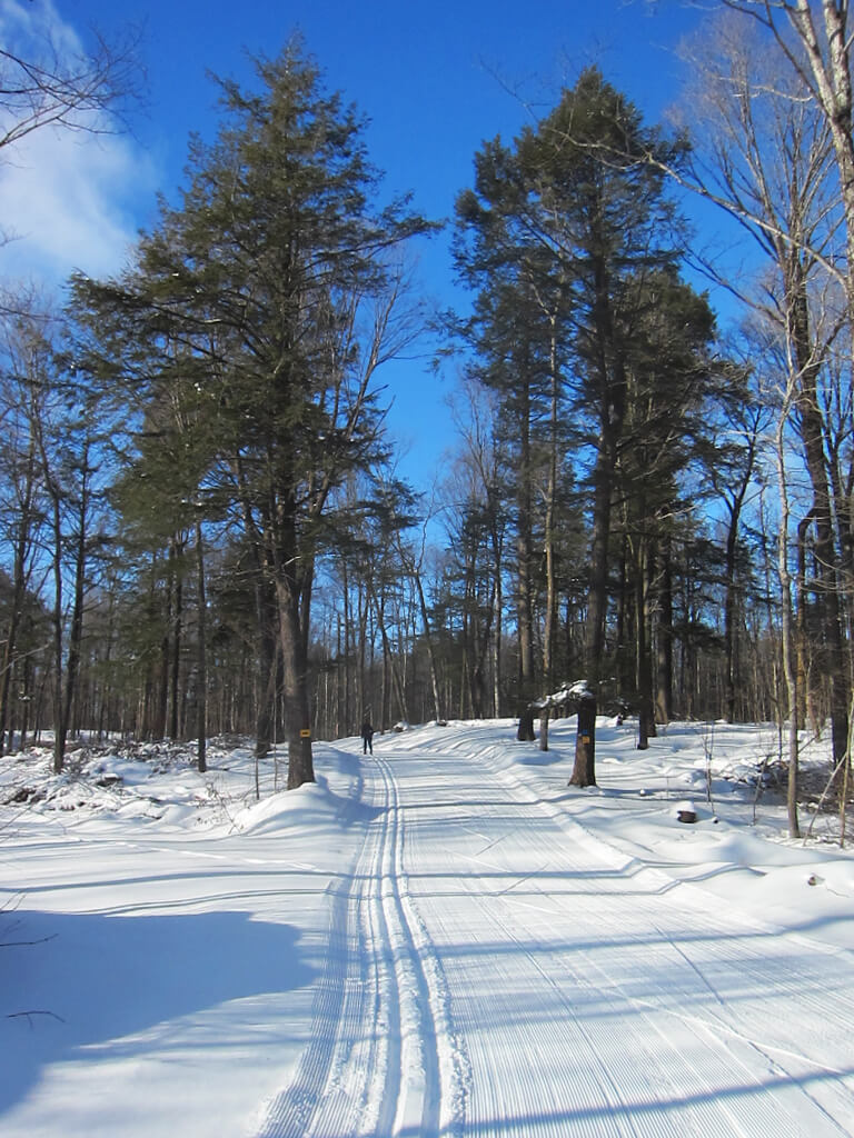 gorgeous surroundings while cross country skiing at the Blue Hills Trail