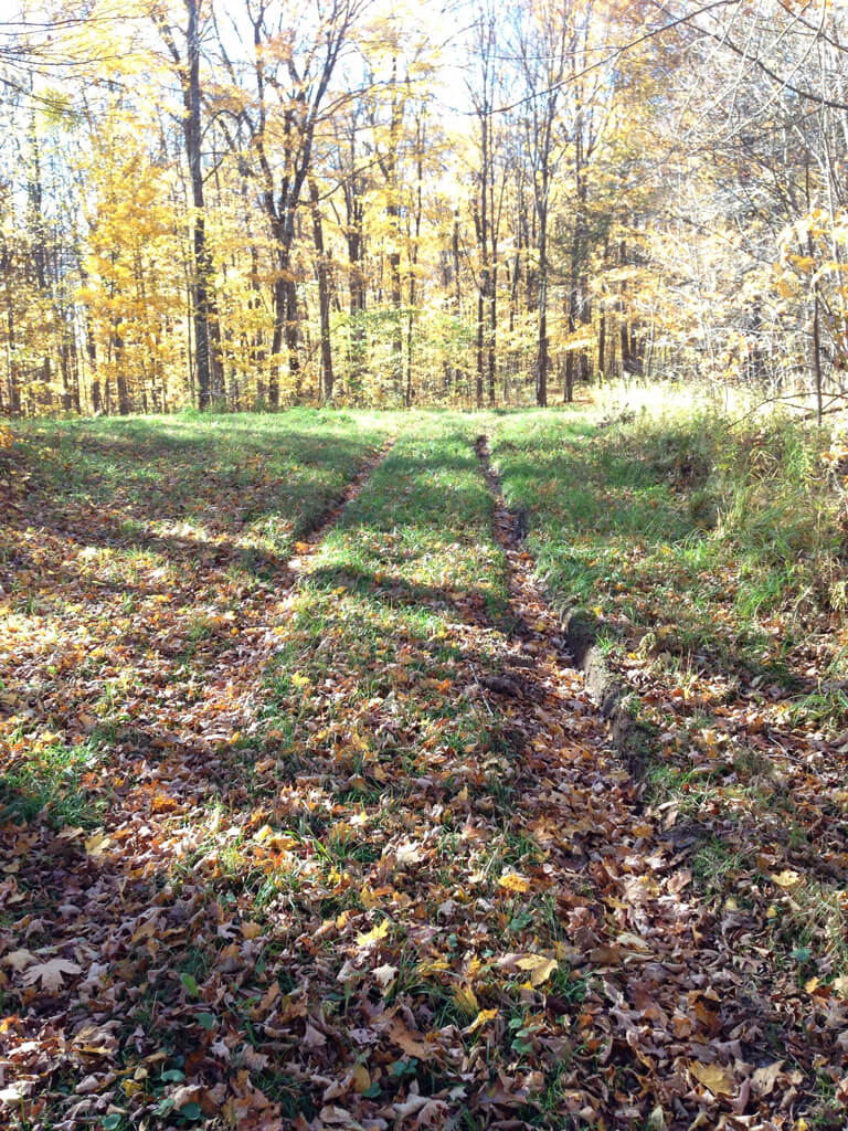 ruts from truck driven illegally on non motorized ski trail