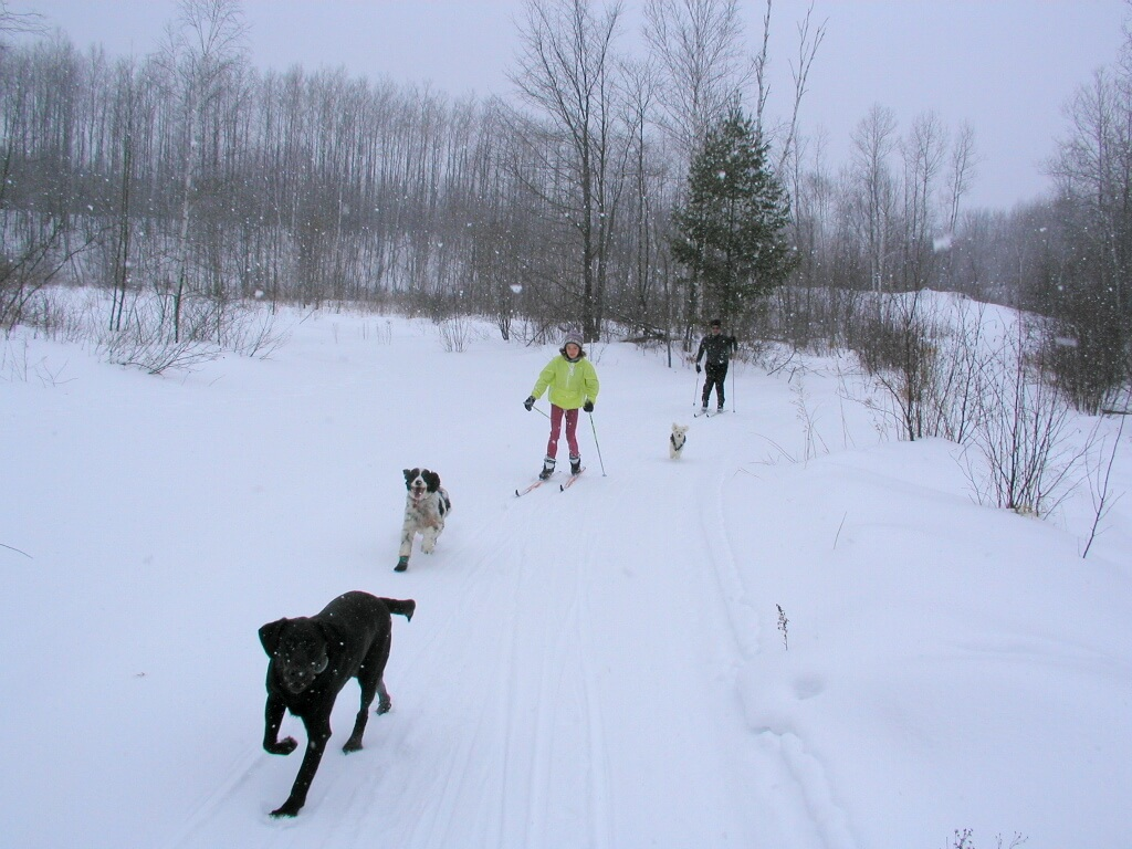 skiing with dogs is fun on the West Side of the Blue Hills Trail