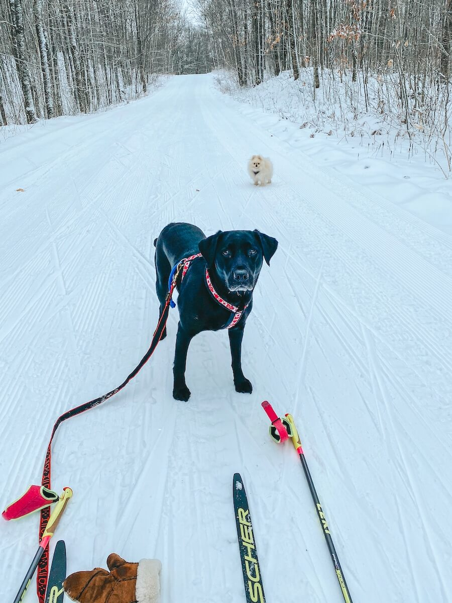 skijoring on the West Side of the Blue Hills Trail