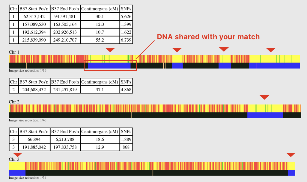 Common DNA Data Comparison