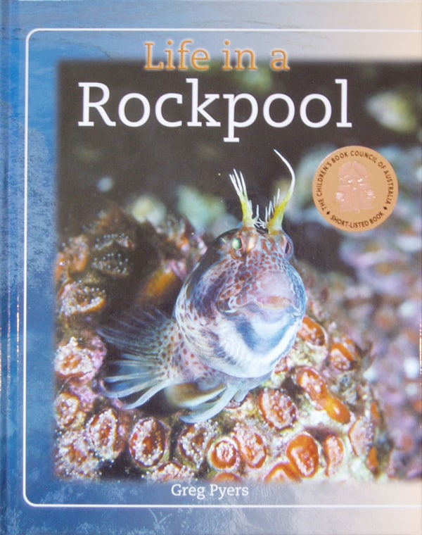 Life in a Rockpool