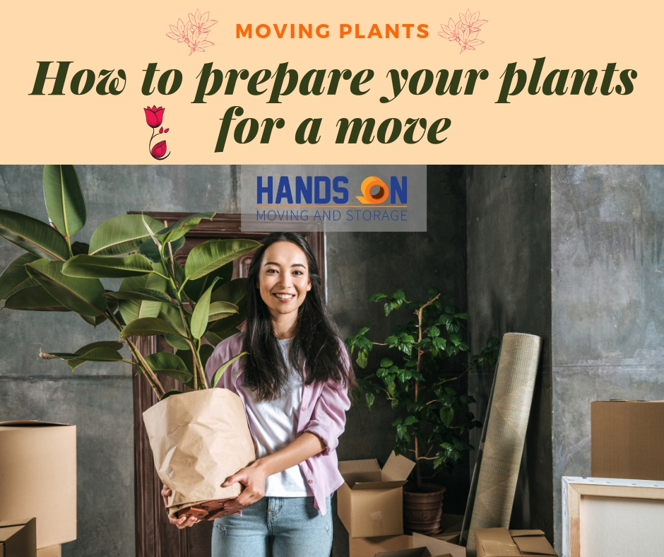Quick Tips for Preparing Indoor and Outdoor Plants Before a Move