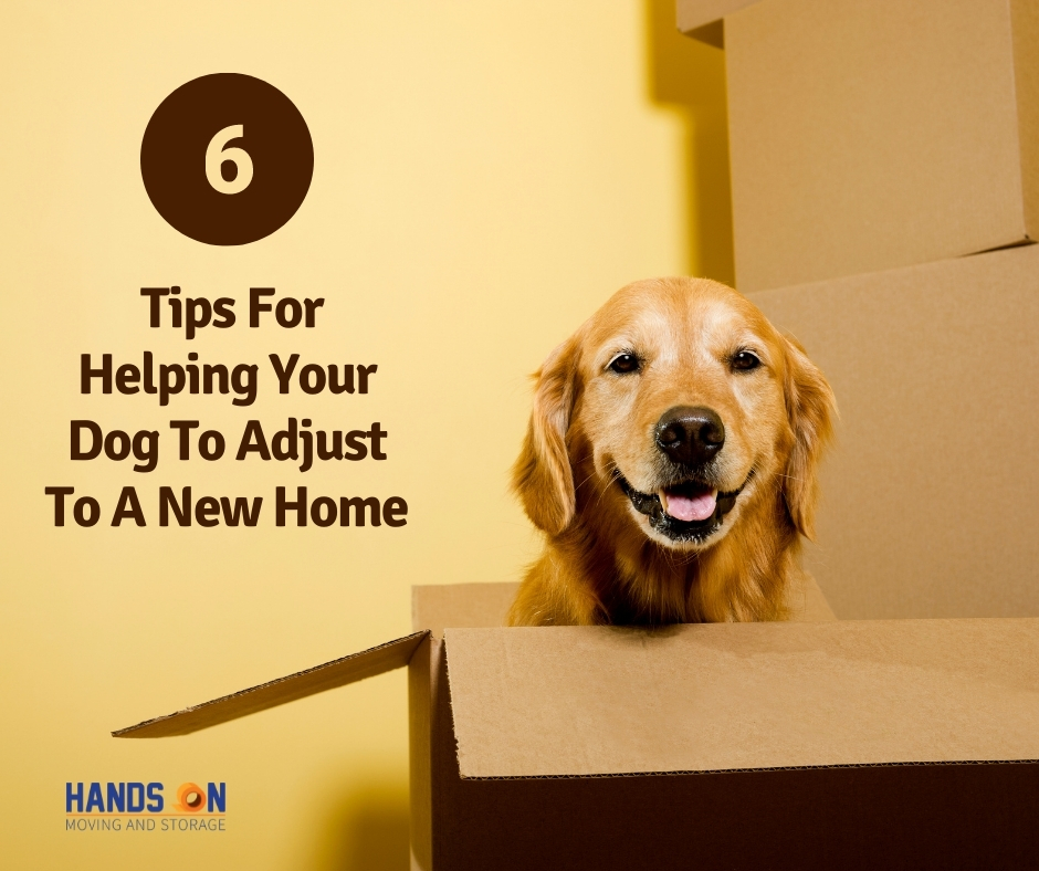 6 Tips For Helping Your Dog To Adjust To A New Place